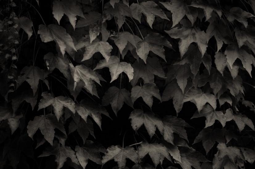 Low Key Leaves